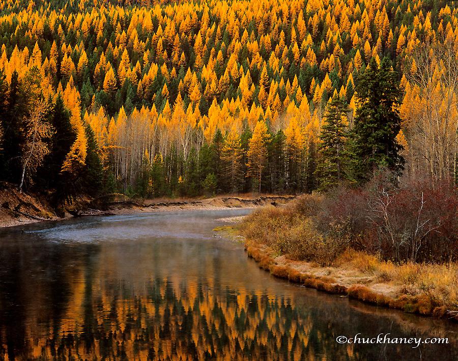 McDonald Creek with autumn tamaracks reflecting in Glacier National Park, Montana, USA