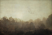 Misty landscape with trees on a fall morning - tetured photograph