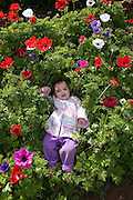Young toddler in a field of cultivated Anemone flowers Model Release available