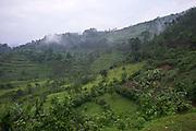 The farmland around the village of Buhoma, Uganda.