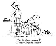 'Can he phone you back? He's scolding the tortoise'