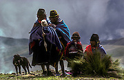 Quechua speaking Indians, descendents of the Incas, herd sheep across the paramo, or highland moors, whilst spinning wool, Cotopaxi Province.