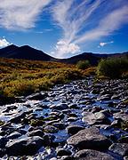 Rocky stream bed of North L'il Creek, Tombstone Territorial Park, Yukon Territory, Canada.
