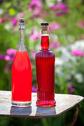 Bottles of homemade rhubarb and redcurrant cordials
