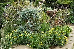 Eucalyptus gunnii, Phormium 'Sundowner' and Chrysanthemum segetum ( Corn marigold )  in the exotic garden at Great Dixter. Fergus Garret working in the border