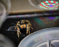 Spider. Image taken with a Fuji X-T3 camera and 80 mm f/2.8 macro lens (ISO 200, 80 mm, f/5.6, 1/125 sec)