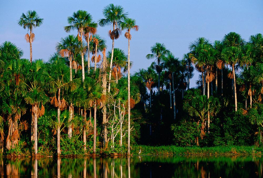 Lake Sandoval in the protected reserve zone Tambo Pata, Peruvian Rain Forest, South America