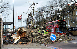 © Licensed to London News Pictures. 28/03/2016. London, UK. A tree is blown over at a bus stop in Clapham, south west London as Storm Katie hits the UK with high winds. Photo credit : Hannah McKay/LNP