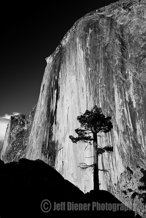 A tree is silhouetted in front of Half Dome in Yosemite National Park, California.