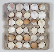 broken eggs shells in a egg tray