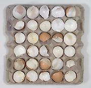 broken eggs shells in a egg tray