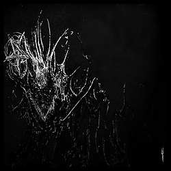White ink on black paper. 11 x 13 in. 2007.