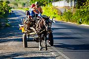 11 JANUARY 2007 - LEON, NICARAGUA:  Men haul firewood on horse drawn carts along the Pan American Highway near Leon, Nicaragua. Photo by Jack Kurtz