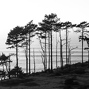 Trees are silhouetted in the late afternoon light with a long period swell bringing in lines of waves in the distance