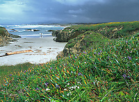 Spring on the Coast of Mendocino near Fort Bragg