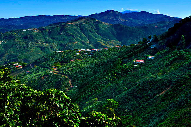 Costa Rica, Tarrazu Valley, Coffee Farm, High Elevation, Coffee Plants, Talamanca Mountain Range, The Los Santos Region