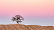Hilltop Oak at dusk, pictured in the distance on Oct. 30, 2020, off Green County D, with a Blue Moon soon to rise in the East.