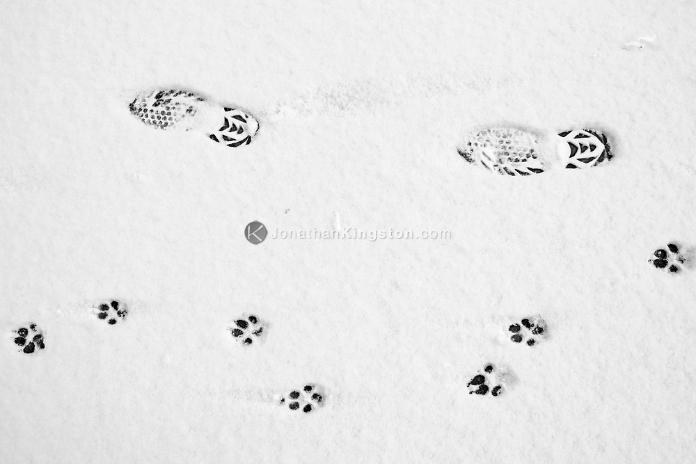 Dog and human footprints on a road in the snow.