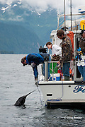 charter recreational fishing boat brings in a salmon shark, Lamna ditropis, Port Fidalgo, Prince William Sound, Alaska, U.S.A.