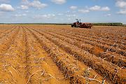 Sao Gotardo_MG, 28 de abril de 2015<br /> <br /> Fotos dos produtores de batata na regiao de sao gotardo.<br /> <br /> Foto: MARCUS DESIMONI / NITRO