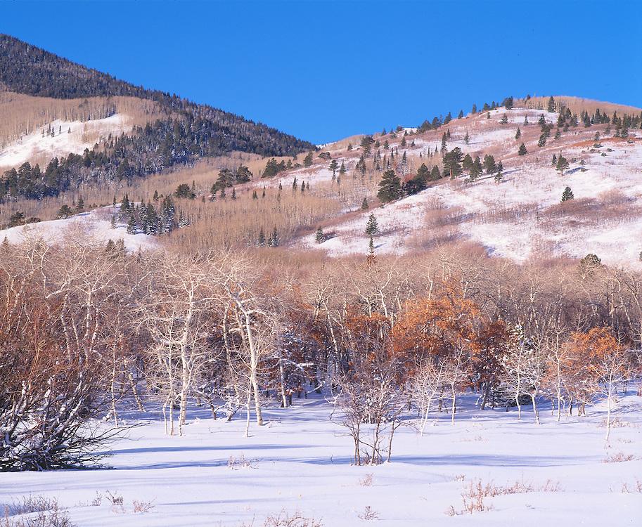 Early Morning Sunlight on Winter Meadow on Blue Mt., Utah
