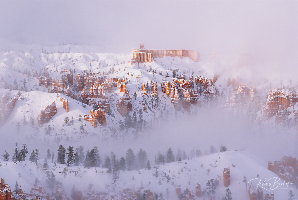 Afternoon light on rock formations in fog below Bryce Point, Bryce Canyon National Park, Utah USA
