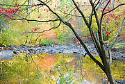 Looking through tree at the fall colors in the stream at Rittenhouse Park Delaware