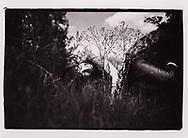Le Peintre Pierre Zufferey dans la région de Sierre, avril 2020<br /> Art peinture artiste<br /> Project terre rare, connecté a la terre<br /> #photoargentique #noiretblanc #noiretblancphotographie #blackandwhite #blackandwhitephotography #photoargentique #photographieargentique #leica #leicamp #ilford #labophoto #terrerare #terresrares #terrerareprojet @omaire. <br /> (STUDIO_54/ OLIVIER MAIRE)