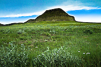 Castle Butte, Big Muddy Saskatchewan, with June flowers in foreground