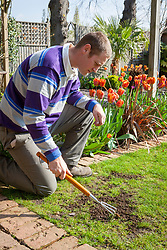 Repairing bare patches in a lawn with lawn seed. Loosening the ground with a rake
