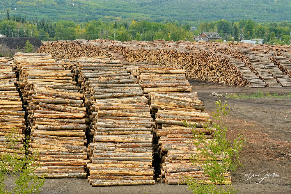 Stockpile of logs in a lumber processing centre, Chetwynd, British Columbia, Canada