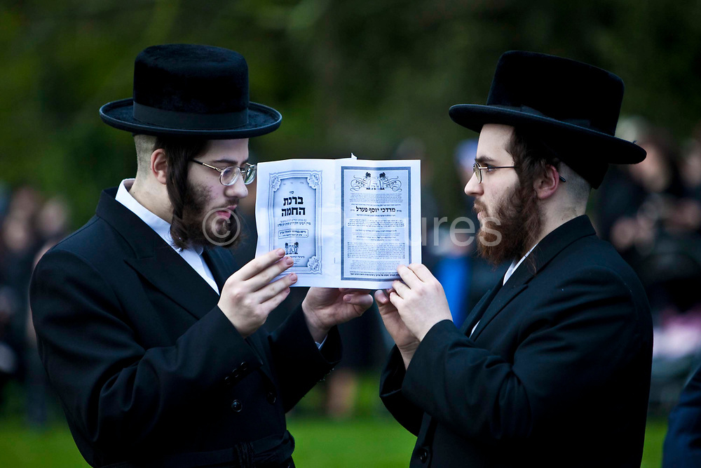 Two Orthodox Jewish men praying from the same prayer book in Springfield park, Stamford Hill, to celebrate the festival of Birkat Hachama (Blessing of the Sun).  It is a Jewish blessing that is recited in appreciation of the Sun once every twenty-eight years, when the vernal equinox as calculated by tradition falls on a Tuesday at sundown. Jewish tradition says that when the Sun completes this cycle, it has returned to its position when the world was created. According to Judaism, the Sun has a 28 year solar cycle known as machzor gadol