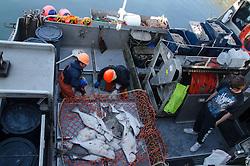 Hauling in the Catch from F/V Miss Gina, Kodiak Island, Alaska, US