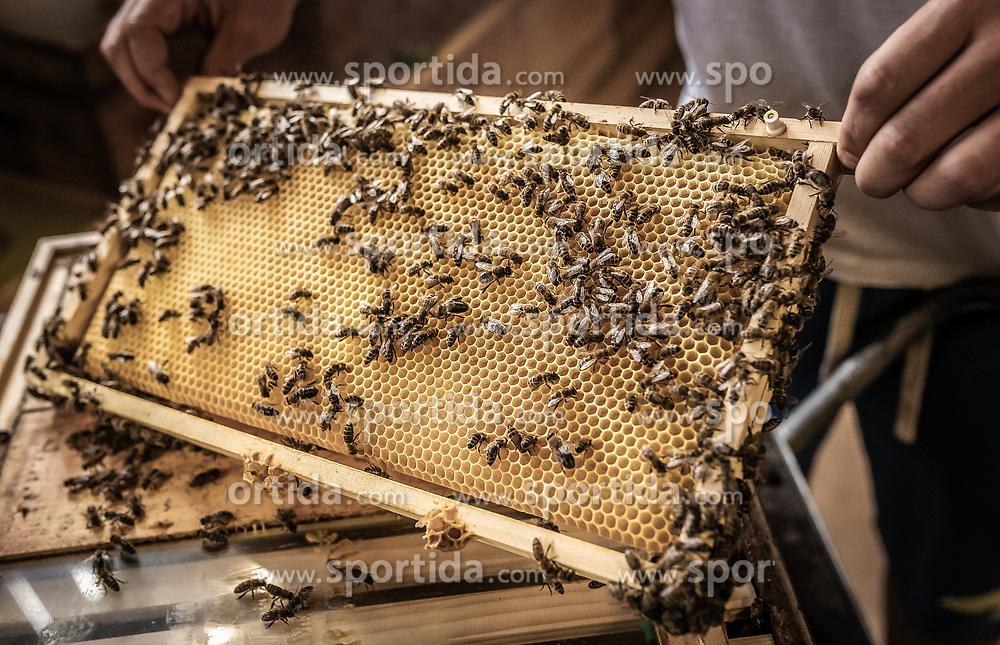 THEMENBILD - der Imker hält eine Wabe mit Bienen in den Händen, aufgenommen am 12. Juni 2019, Piesendorf, Österreich // the beekeeper holds a honeycomb with bees in his hands on 2019/06/12, Piesendorf, Austria. EXPA Pictures © 2019, PhotoCredit: EXPA/ Stefanie Oberhauser