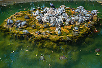 Athens, Greece. The National Garden is a large public park. Turtles in a pool.