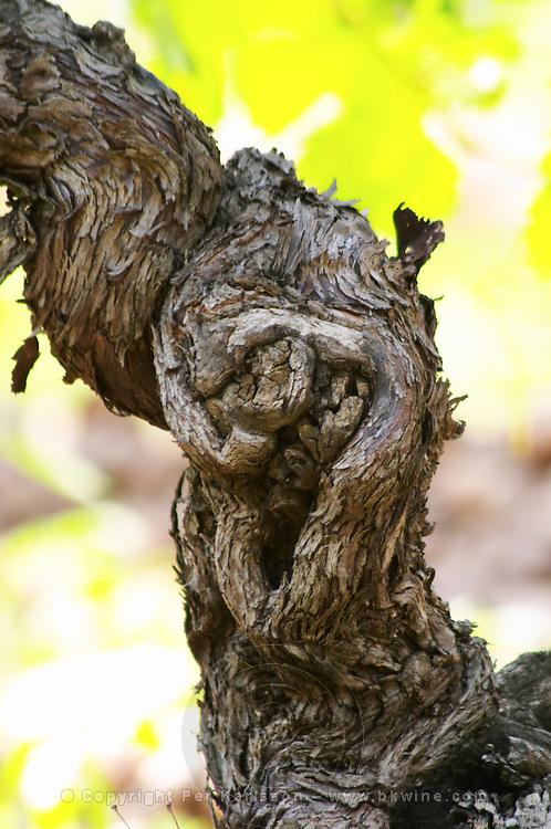 carignan old vine vineyard chateau de nages rhone france