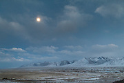 Yak herd returning to camp, under a full moon..In camp of Ech Keli (er Ali Boi's camp)...Trekking through the high altitude plateau of the Little Pamir mountains, where the Afghan Kyrgyz community live all year, on the borders of China, Tajikistan and Pakistan.