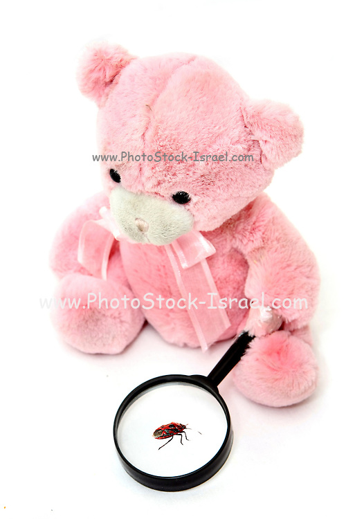 Teddy Bear with magnifying glass studies an insect