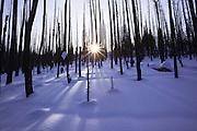 Sunsets through burnt trees on MacDonald Pass, Montana