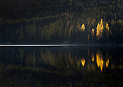 The last light of day illumintes larch along the shores of Lake Marshall in western Montana.