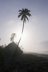 Palm trees against cloudy sky at seaside, Tangalle, South Province, Sri Lanka