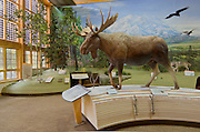 Exhibits in the Denali National Park Visitors Center, United States Parks Service.