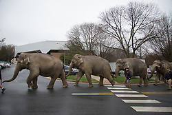 """Students watch as elephants walk through the Patriot Center parking lot at George Mason University. Ringling Bros. and Barnum & Bailey Circus started in 1919 when the circus created by James Anthony Bailey and P. T. Barnum merged with the Ringling Brothers Circus. Currently, the circus maintains two circus train-based shows, the Blue Tour and the Red Tour, as well as the truck-based Gold Tour. Each train is a mile long with roughly 60 cars: 40 passenger cars and 20 freight. Each train presents a different """"edition"""" of the show, using a numbering scheme that dates back to circus origins in 1871 — the first year of P.T. Barnum's show."""