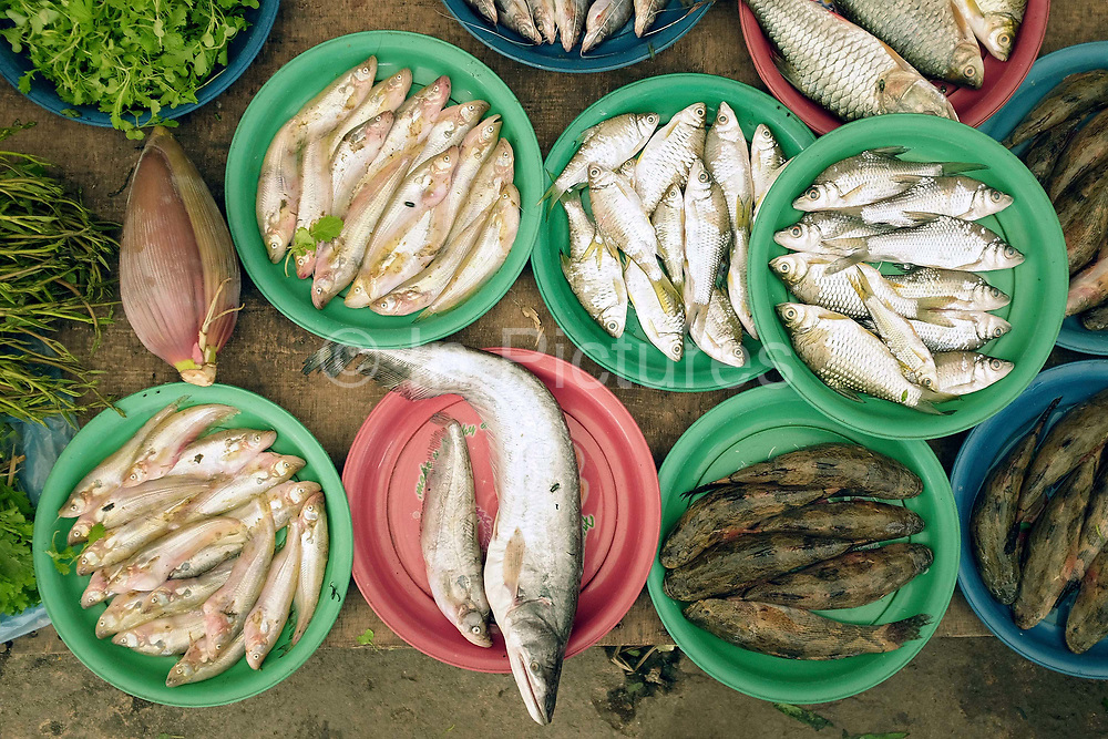 Fish for sale at Hua Kua evening market on the outskirts of Vientiane, Lao PDR. A large variety of local products are available for sale in fresh markets all over Laos, all being sold on small individual stalls.