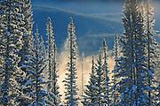 Fog rising over the Bow River st sunrise. Castle Junction, Banff National Park, Alberta, Canada
