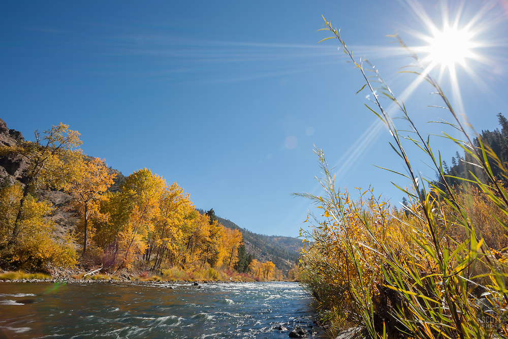 """""""Truckee River in Autumn 12"""" - Photograph of yellow leaved cottonwood trees and the sun, taken along the shore of the Truckee River in Autumn."""