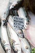 Fresh Mackerel, Scomber scombrus, on sale at St Helier Fish Market in Jersey, Channel Isles