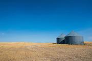 Lonely garner in a field, Badlands National Park, South Dakota, USA