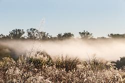 Wetland cells, Great Trinity Forest, Dallas, Texas, USA