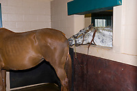 Winstar Farm (thoroughbred horse farm), Versailles (near Lexington), Kentucky USA